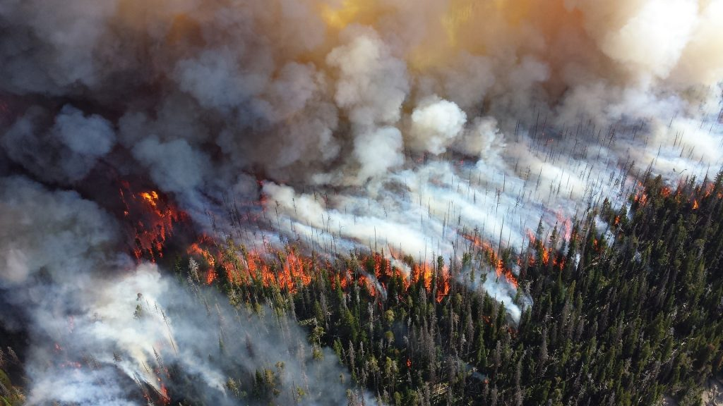 Climate Change Forest Fire